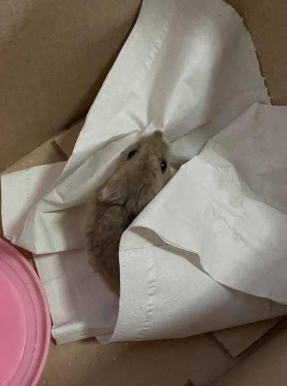 No dia 11 de outubro o gato levou o 1º hamster para casa. (Foto: Facebook/ChuLei Teo)