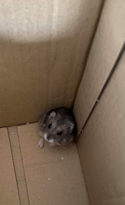 No dia 12 de outubro o gato levou o segundo hamster para casa. (Foto: Facebook/ChuLei Teo)