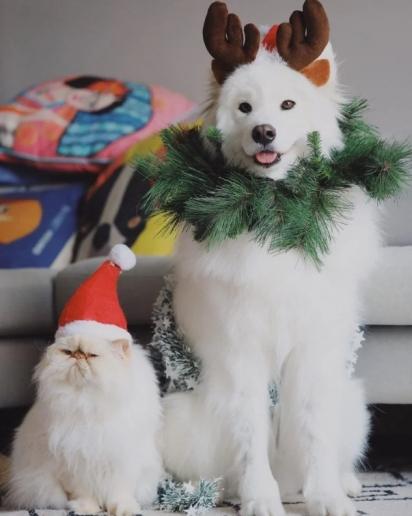 Estou em dúvida: será que Casper preferia ter ficado com a fantasia de decoração natalina ao invés a de Papai Noel? (Foto: Instagram/casperandromeo)