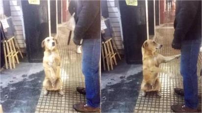 Cachorro de rua aprende a sentar e estender a pata para pedir atenção e comida. (Foto: Facebook/Red Mascotera Argentina)