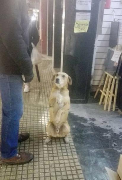 O cachorro aprendeu a sentar e estender a patinha para as pessoas. (Foto: Facebook/Red Mascotera Argentina)