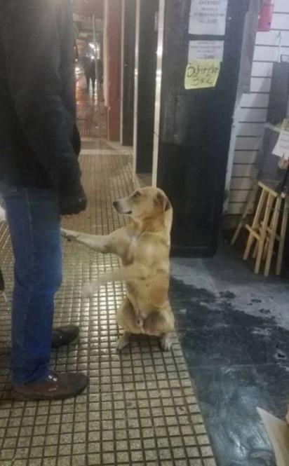 Depois da repercussão das fotos o cachorro de rua foi adotado. (Foto: Facebook/Red Mascotera Argentina)