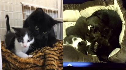 Gato de rua protege filhotes gatinhos que encontrou abandonados. (Foto: Facebook/ Homeless Animal Adoption League)