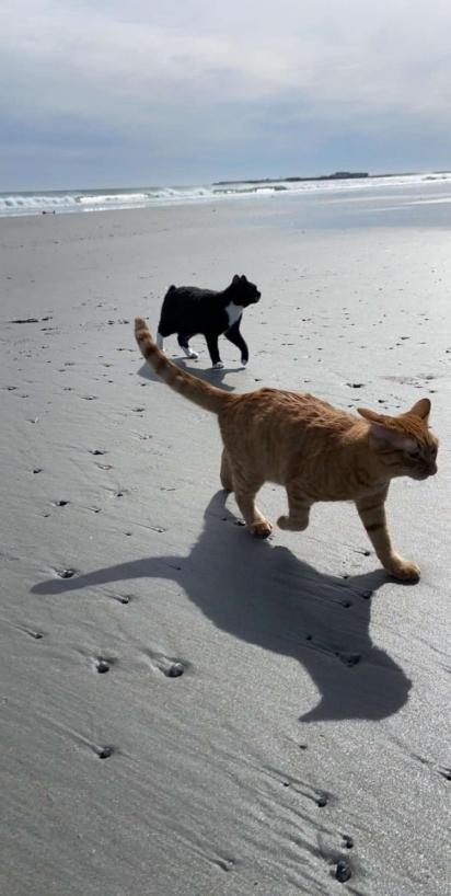No início o gatinho correu e brincou muito ao lado do seu irmão felino, Moustachio. (Foto: Instagram/iispumpkincat)