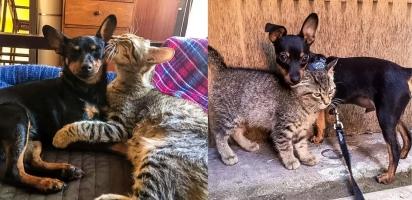 Amizade de cachorrinho e gata emociona dona. (Foto: Arquivo Pessoal/Delfina Plaja)