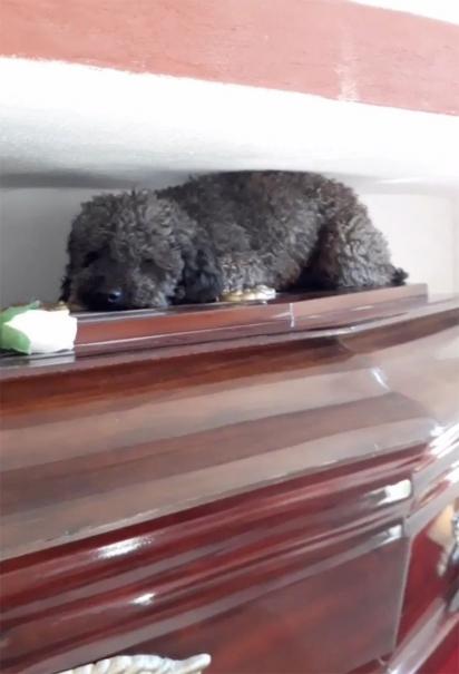 Benito sobre o caixão de Joha. (Foto: Reprodução Twitter/@Bele_dure)