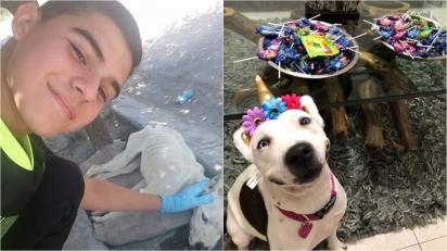 Jovem resgata cadela abandonada e a transforma numa linda e saudável pit bull. (Foto: Twitter/@Isravilla18)