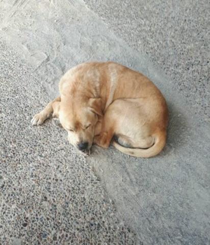 O cão Drax foi encontrado no estacionamento de um supermercado. (Foto: Facebook/Charmaine Hulley)