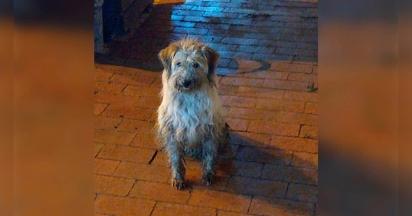 O cachorrinho estava no posto de gasolina abaixo de chuva e no frio. (Foto: Facebook/Ngushëllimi Silva)