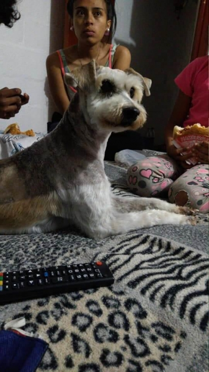 O cachorrinho passou por uma transformação e vive feliz ao lado de uma família amorosa. (Foto: Facebook/Ngushëllimi Silva)