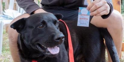Esse cão foi um dos primeiros animais a receber o atendimento. (Foto: Alcaldía de Pereira)