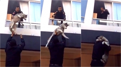 Policiais resgatam cão da raça husky de incêndio em apartamento no México. (Foto: Reprodução Twitter/@SSC_CDMX)