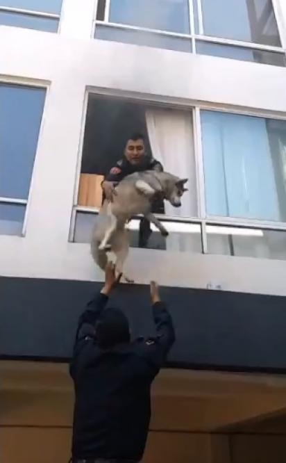 Policial joga o cachorro pela janela para que o colega no andar de baixo o pegue. (Foto: Reprodução Twitter/@SSC_CDMX)