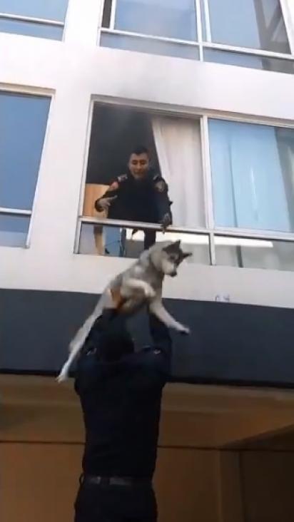 Rapidamente o policial pega no ar o cachorro. (Foto: Reprodução Twitter/@SSC_CDMX)