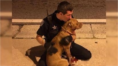 O policial sentou-se ao lado do pit bull ferido e o abraçou até a chegada do resgate. (Foto: Facebook/Orange County Sheriffs Office, Florida)