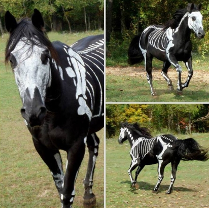 Cavalo esqueleto. (Foto: Reprodução/knotjustrope)
