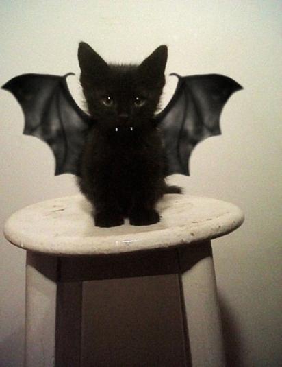 Morcego gato. (Foto: Reprodução/imgur.com)
