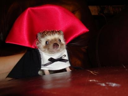 Vampire Hedgehog. (Foto: Reprodução/imgur.com)