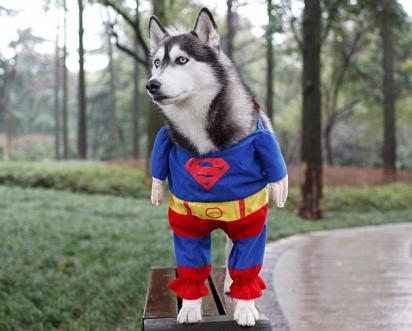 Super husky. (Foto: Reprodução/ DailyMail)