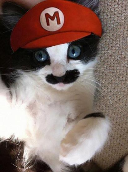 Mario Cat. (Foto: Reprodução/ cutestuff.co)