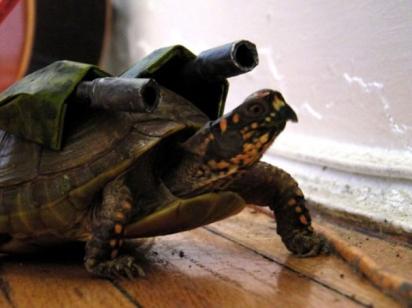 Blastoise Pokémon Turtle. (Foto: Reprodução/collegehumor.com)