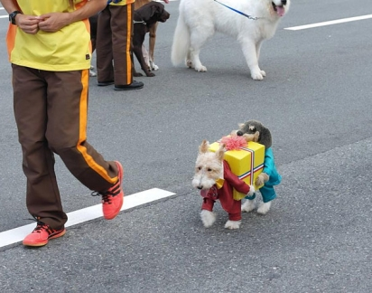 Cachorro(s) carregando presentes. (Foto: Reprodução/ boingboing.net)