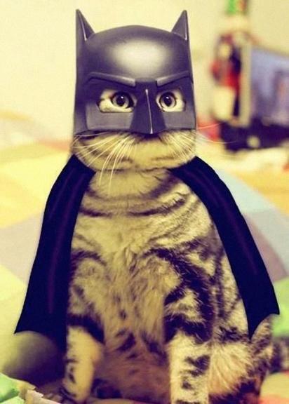 Gato Batman. (Foto: Divulgação)