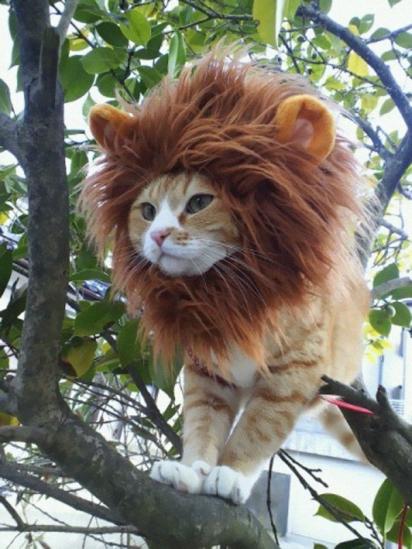 Gato leão. (Foto: Reprodução/verybesthalloweencostumeideas.com)