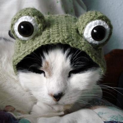 Gato sapo. (Foto: Reprodução/etsy.com)