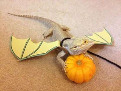 Lagarto vestido de dragão. (Foto: Reprodução/ crenk.com)
