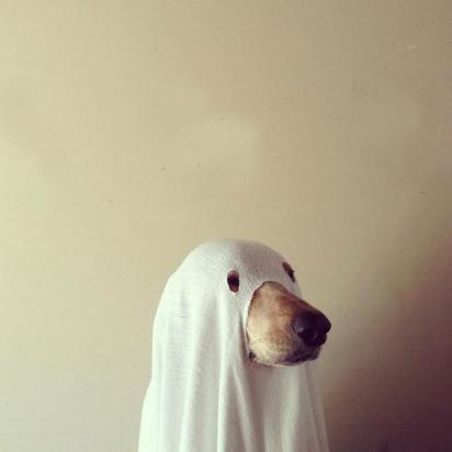 Um fantasma (definitivamente não é um cachorro). (Foto: Reprodução/maddieonthings.com)