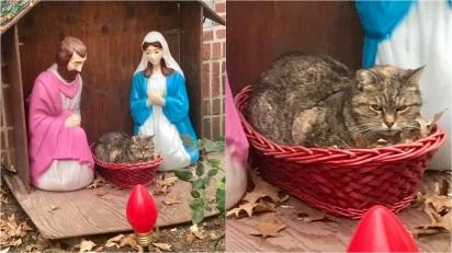 Gato é fotografado deitado na manjedoura no lugar do Menino Jesus. (Foto: Facebook/ Brooke Goldman)