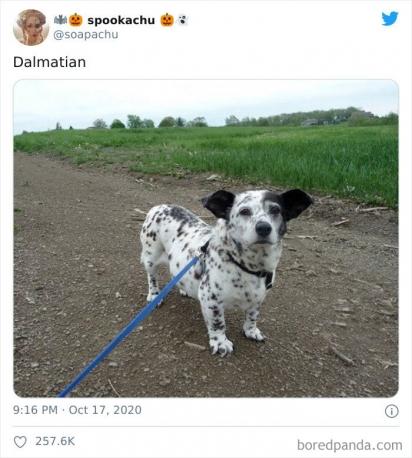 Corgi com Dálmata. (Foto: Twitter/@soapachu)