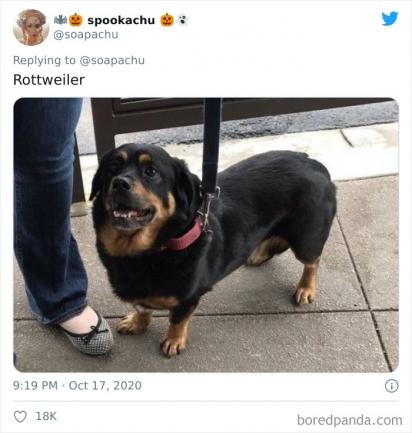 Corgi com Rottweiler (de novo). (Foto: Twitter/@soapachu)