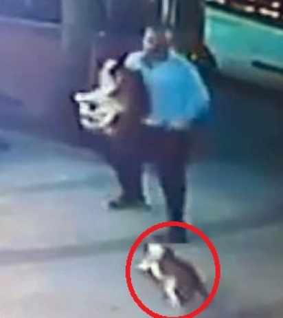 Homem ergue o cachorro para gata não atacá-lo. (Foto: Reprodução/Newsflash)