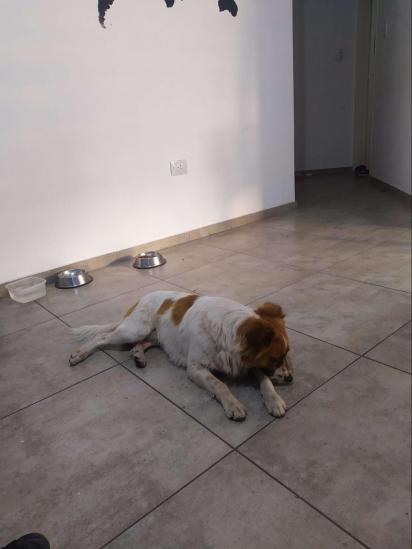 O casal, comovido com a situação, levou o cachorro para casa. (Foto: Arquivo Pessoal/Lujan Videla)
