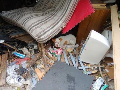 O pit bull de poucos meses foi encontrado em situação de extrema negligência e maus-tratos. (Foto: Facebook/Stray Rescue of St. Louis)