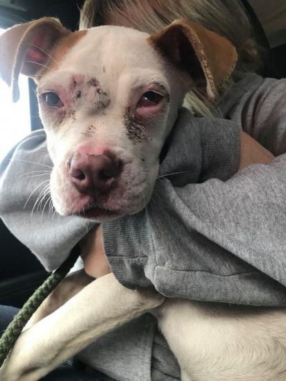 O grupo de resgate da ONG Stray Rescue of St. Louis não mediram esforços para resgatar o filhotre de pit bull. (Foto: Facebook/Stray Rescue of St. Louis)