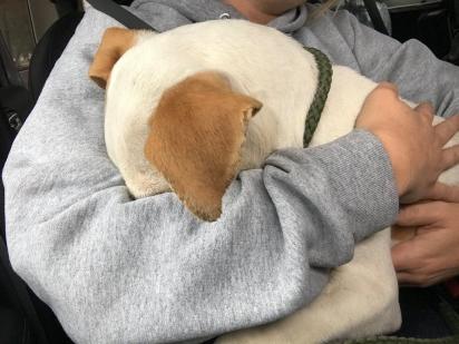 Depois de muito sofrimento o pequeno pit bull foi adotado. (Foto: Facebook/Stray Rescue of St. Louis)
