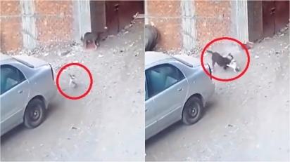 Cachorro ataca criança e gato corre para afastar cachorro. (Foto: Reprodução Twitter/@MiraMiasilChe)