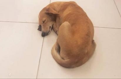 A cachorrinha foi resgatada por Arnaldo Rocha Neto em abril deste ano. (Foto: Facebook/ Arnaldo Rocha Neto)