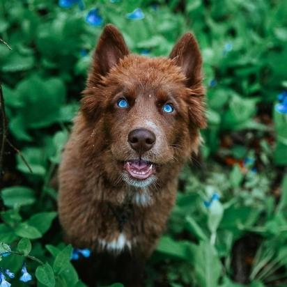 O cão adora se  aventurar em meio a floresta. (Foto: Facebook/Nicole Spahn)
