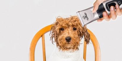 Kit de cuidados para animais de estimação. (Foto: Reprodução/Boing Boing)