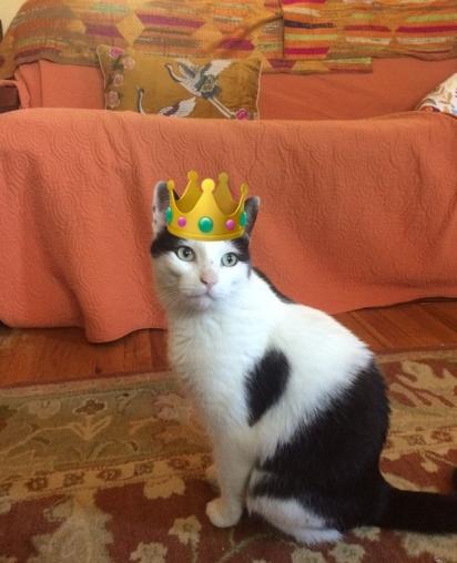 O gato foi batizado de Raymond, em homenagem ao homem que lhe salvou e agora é tratado como um rei. (Foto: Reprodução/littlewanderersnyc)