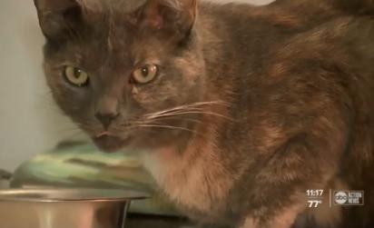 O gato  da família de Palm Harbor, na Flórida (EUA), foi quem encontrou a cobra de duas cabeças. (Foto: Reprodução/abc Action New)