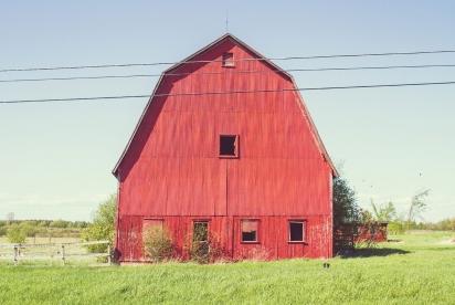 Momo está escondido em um celeiro vermelho. (Foto: Andrew Knapp)