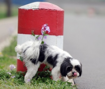 A infecção urinária é uma inflamação que deixa o cão desconfortável para urinar. (Foto: Divulgação/Pixabay)