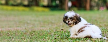 Qualquer cão pode ter uma infecção de urina. (Foto: Divulgação/Pixabay)
