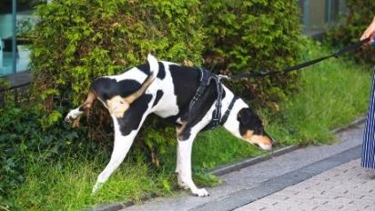 É necessário levar o cão ao veterinário para identificar as causas e poder tratá-la. (Foto: Divulgação/Pixabay)