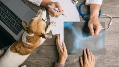 Existem muitos motivos para o cachorro vomitar é bom identificá-la para reportar ao médico veterinário. (Foto: Divulgação/unsplash)